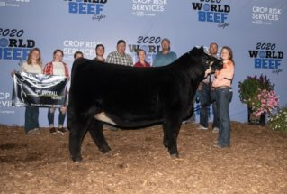 AddisonFidler_GC_PercentageSimm_H_WorldBeefExpo_1_977x658