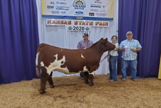 AbbyBrown_RC_Shorthorn_H_KS_SF_977x658